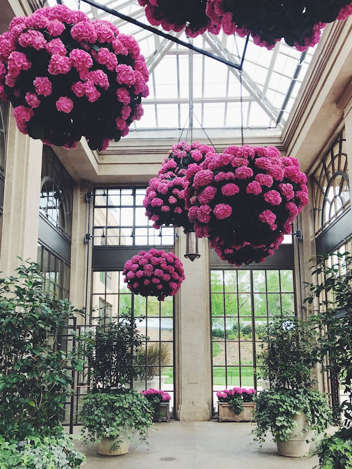 Longwood Gardens in bloom in Philadelphia, Pennsylvania