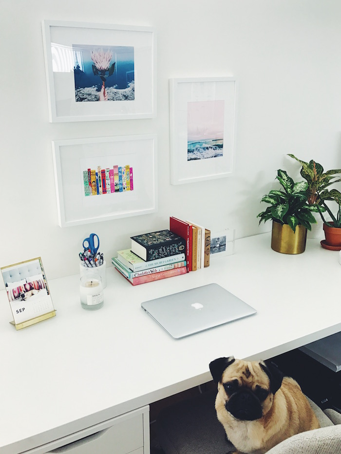 Christine Amorose Merrill's desk and Gertie the Pug