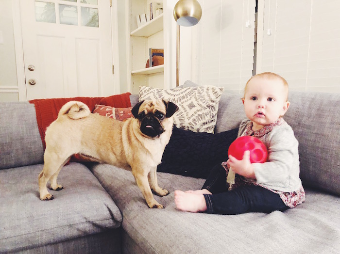 Gertie the Pug and her friend Hazel