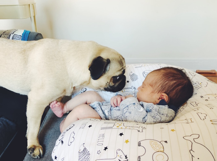 Gertie the Pug and Baby Jude